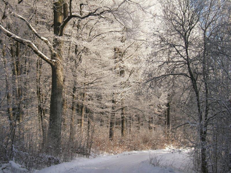 Chemin forestier de l'hiver photographie stock libre de droits