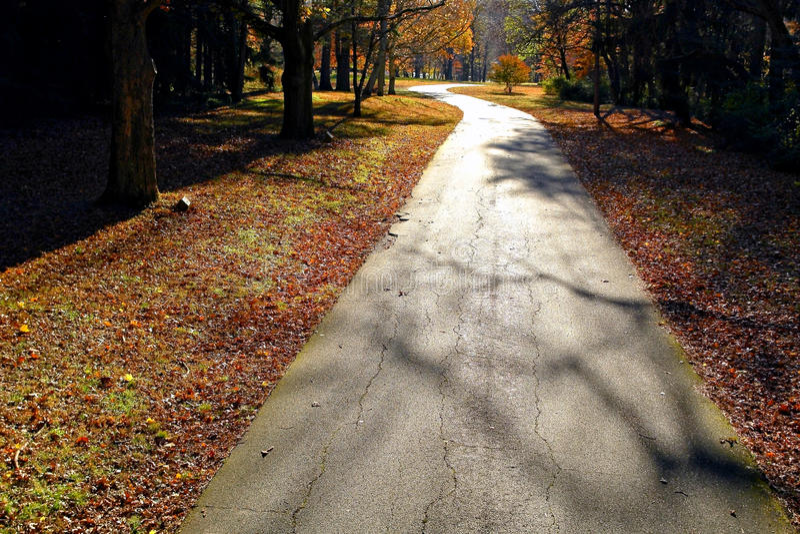 Chemin forestier de pays de Narrrow en automne photos libres de droits