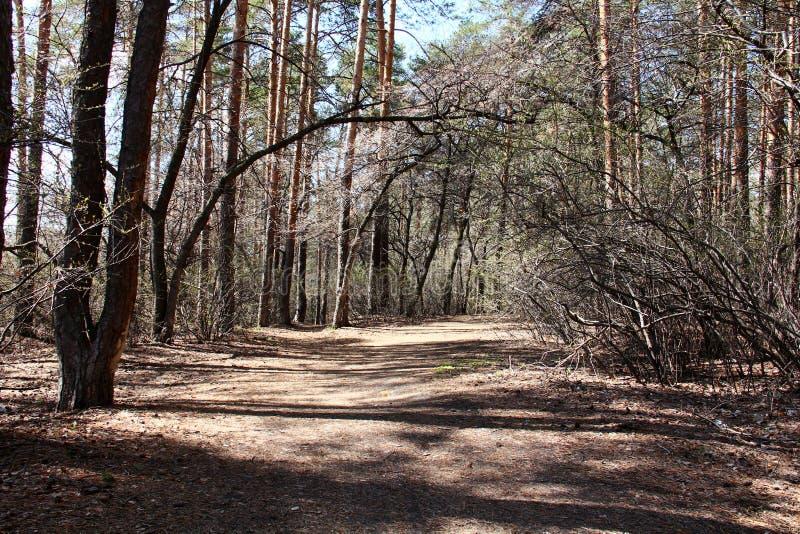Chemin forestier de premier ressort photo stock