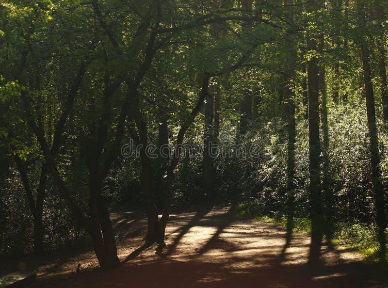 Chemin forestier de premier ressort images libres de droits