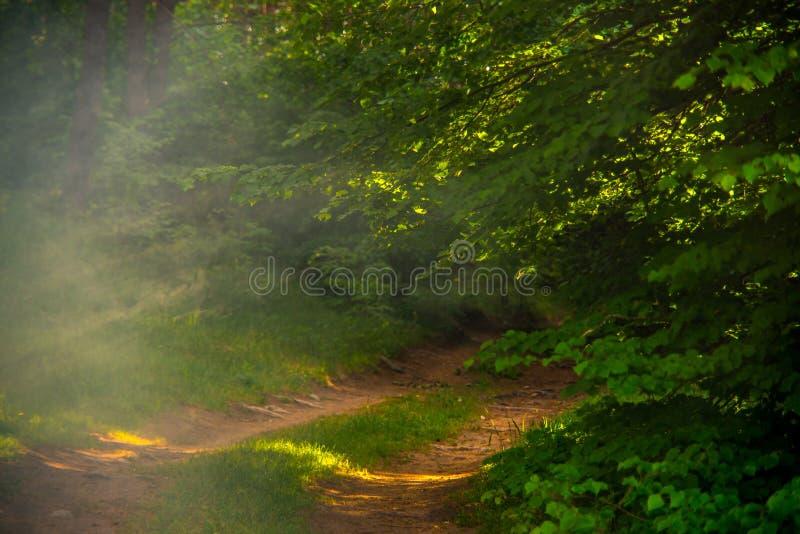 Chemin forestier en matin brumeux photo libre de droits