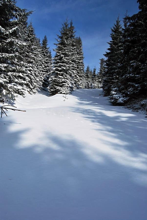 chemin forestier en montagnes de jeseniky d 39 hiver avec le ciel bleu image stock image du. Black Bedroom Furniture Sets. Home Design Ideas