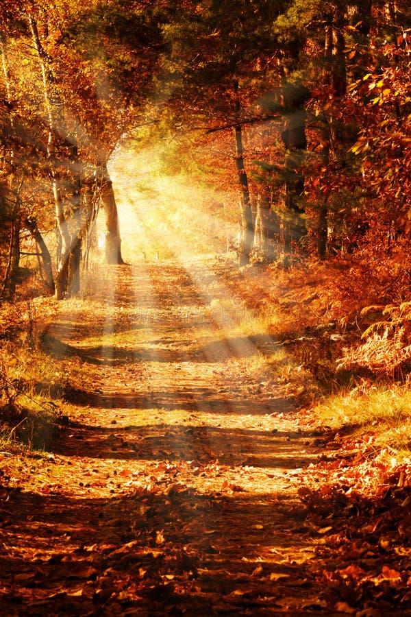 Chemin forestier ensoleillé en automne image libre de droits