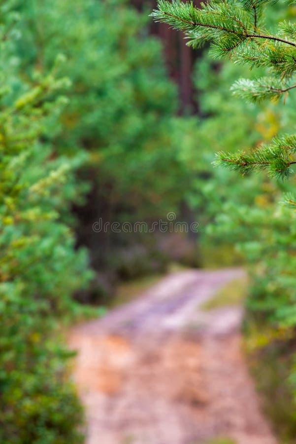 Download Chemin forestier et bokeh image stock. Image du directement - 77158503