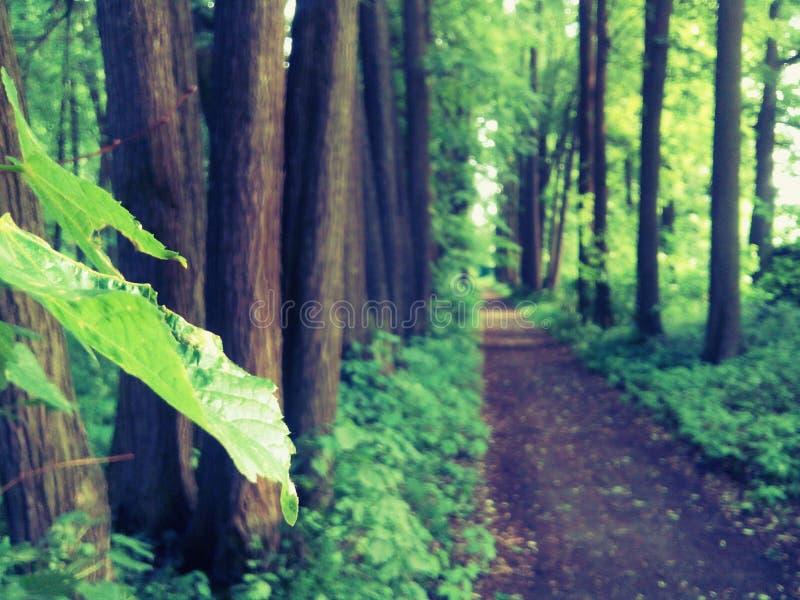 Chemin forestier et temps parfait images stock