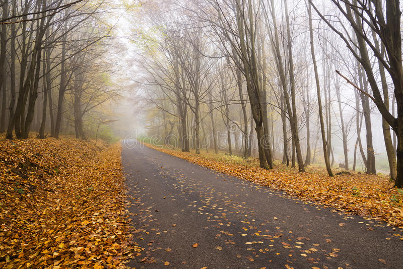 Chemin forestier flou image stock