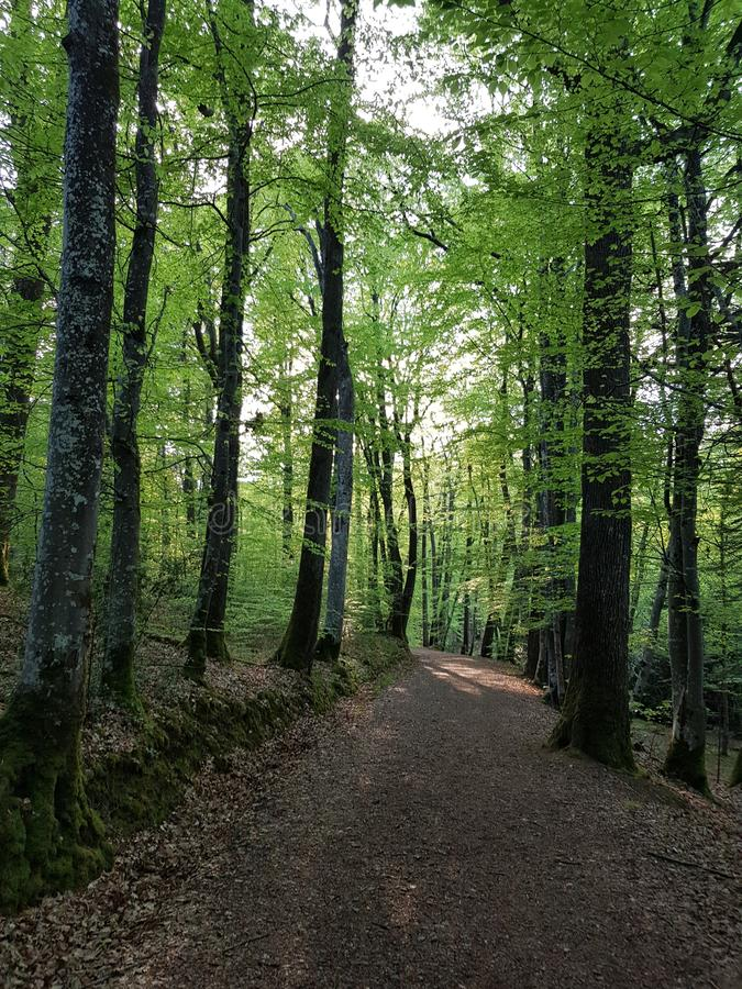 Chemin forestier France images stock