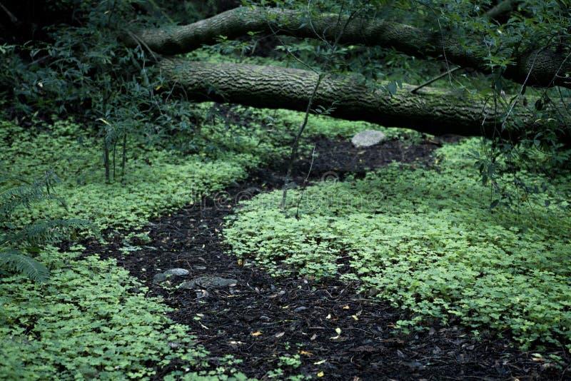 Chemin forestier majestueux vert des trèfles image stock