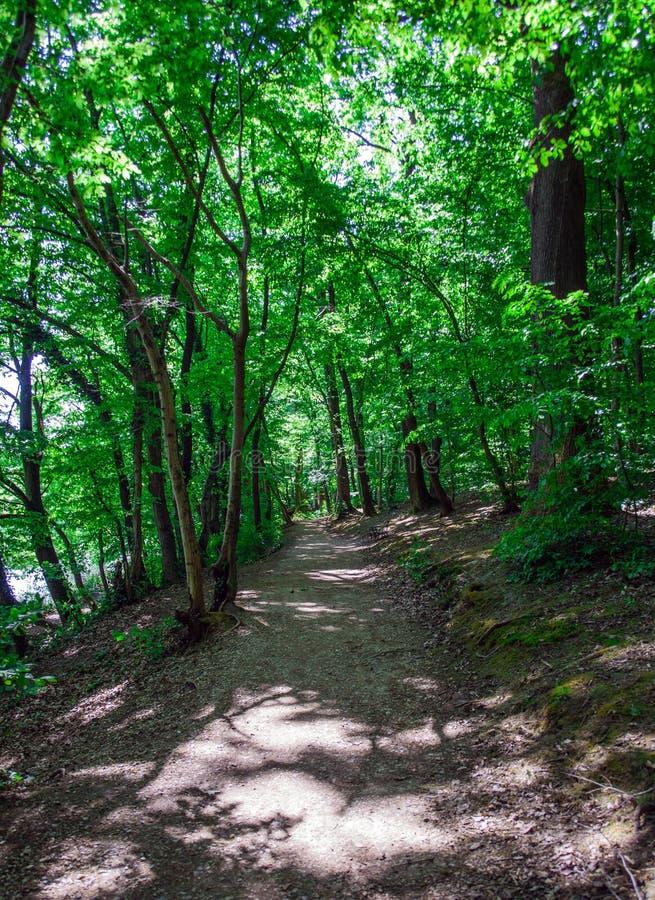 Chemin forestier pendant le printemps photos stock