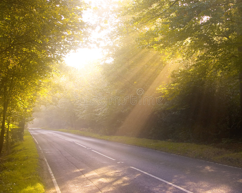 Chemin forestier rêveur. Aube ou crépuscule. photo stock