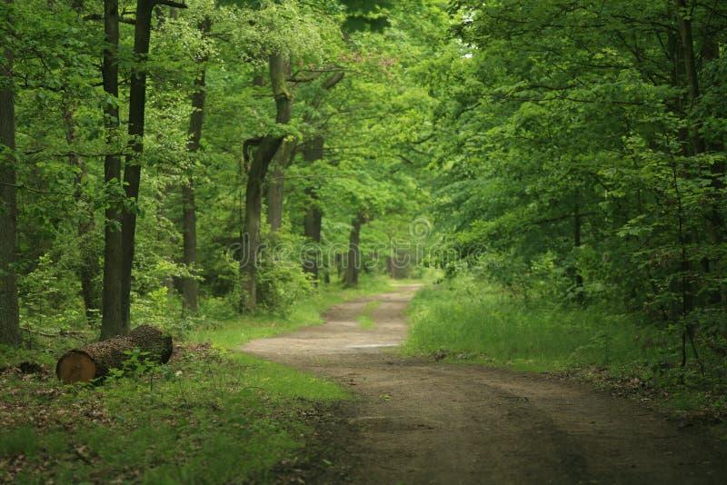 Chemin forestier v3 photos libres de droits