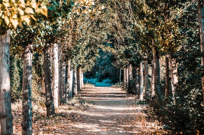 Chemin incroyable à travers la forêt entourée par des arbres images libres de droits