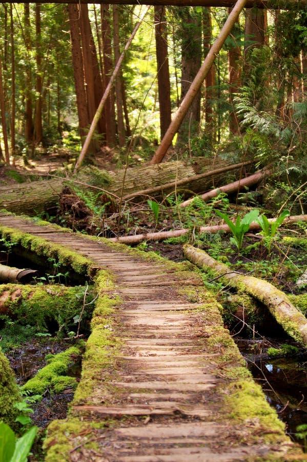 Chemin incurvé V1 image libre de droits