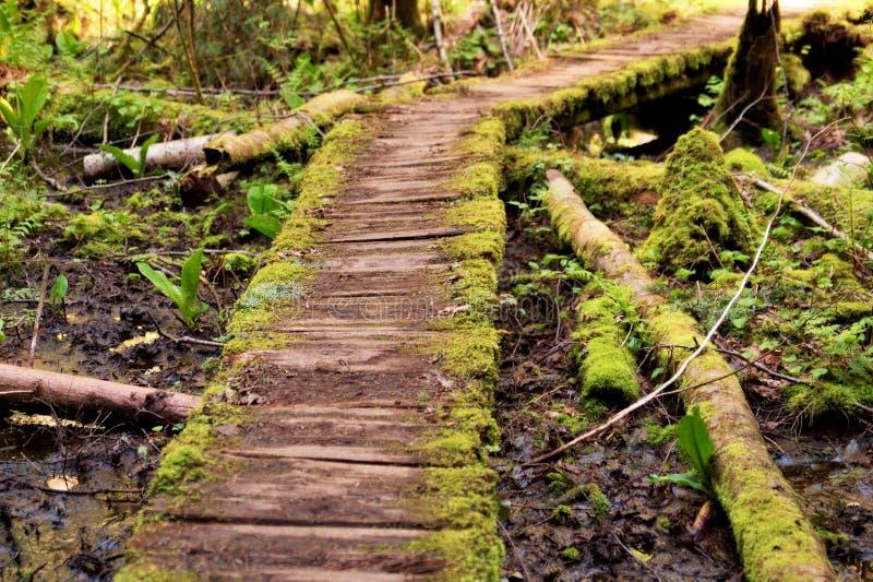 Chemin incurvé V2 photo stock