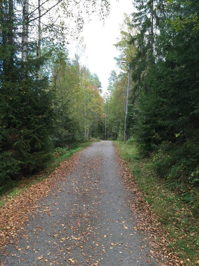 Chemin isolé dans la forêt image stock