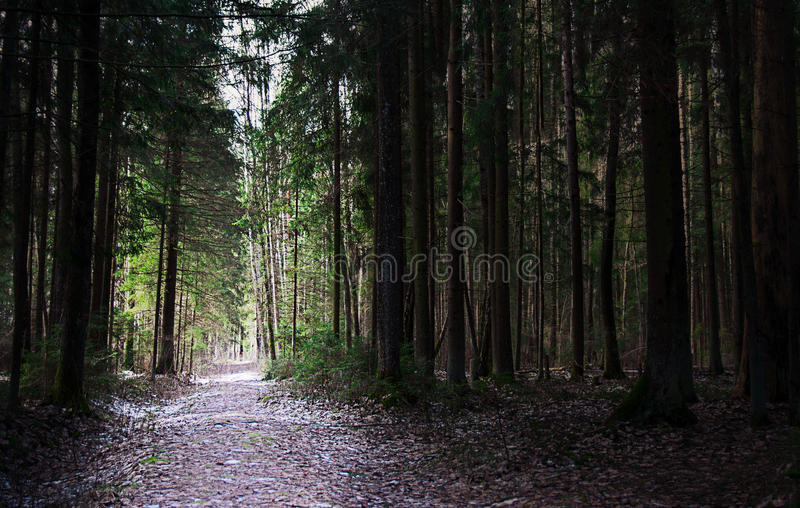 Chemin léger dans une forêt foncée photo stock