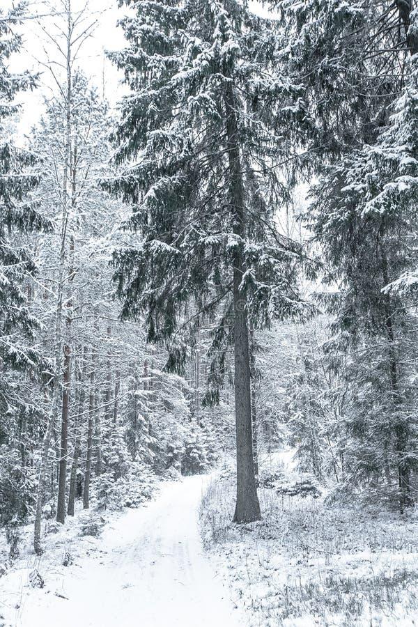 Download Chemin Large Dans Les Bois Dans Un Jour D'hiver Image stock - Image du weather, snowfall: 87708049
