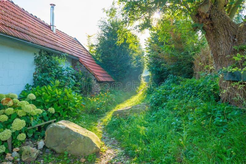 Chemin le long d'une maison et arbres au soleil à la chute photos libres de droits