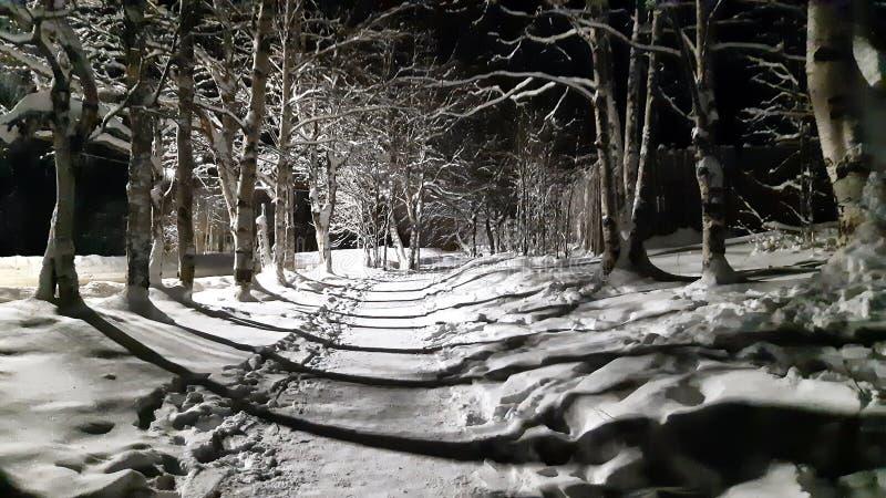 Chemin le long de la route la nuit dans Frost dur photos libres de droits