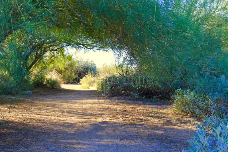 Chemin ombreux photo stock