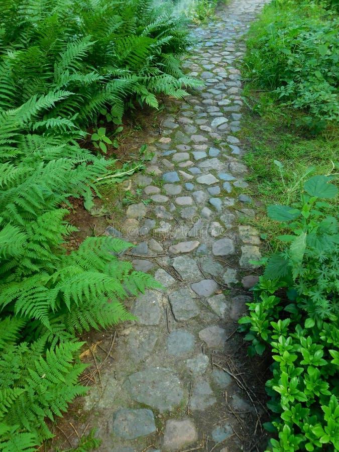 Chemin pavé en cailloutis dans un jardin photo libre de droits