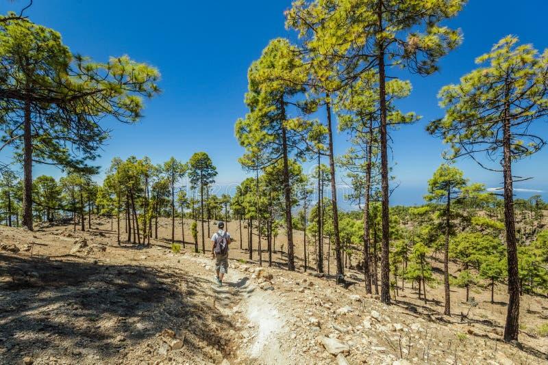 Chemin pierreux entouré par des pins au jour ensoleillé Ciel bleu clair et quelques nuages suivant la ligne d'horizon Route de ch photos stock