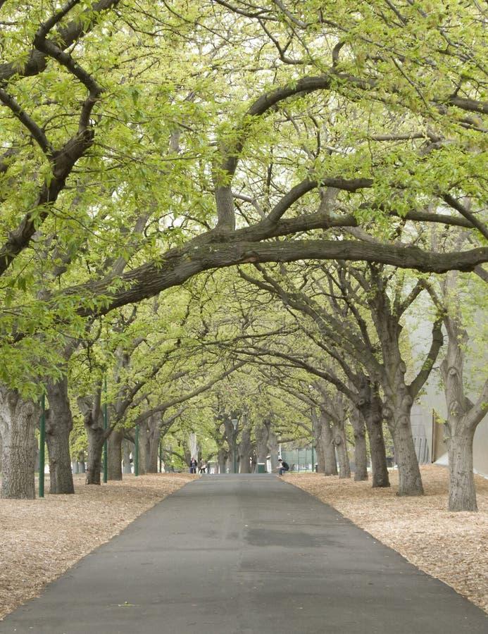 Chemin rayé par arbre photographie stock