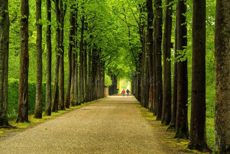 Chemin rayé par arbre images stock