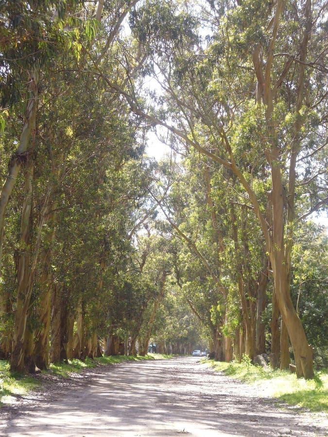 Chemin rayé par des arbres image stock