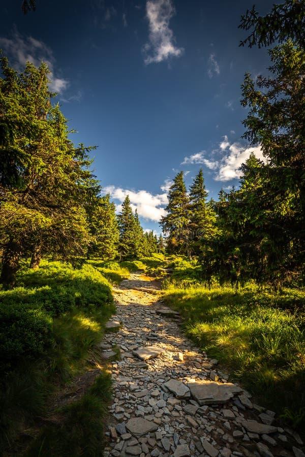 Chemin rocheux étroit dans la forêt verte de Serak à Velky Keprnik dans Jeseniky images libres de droits