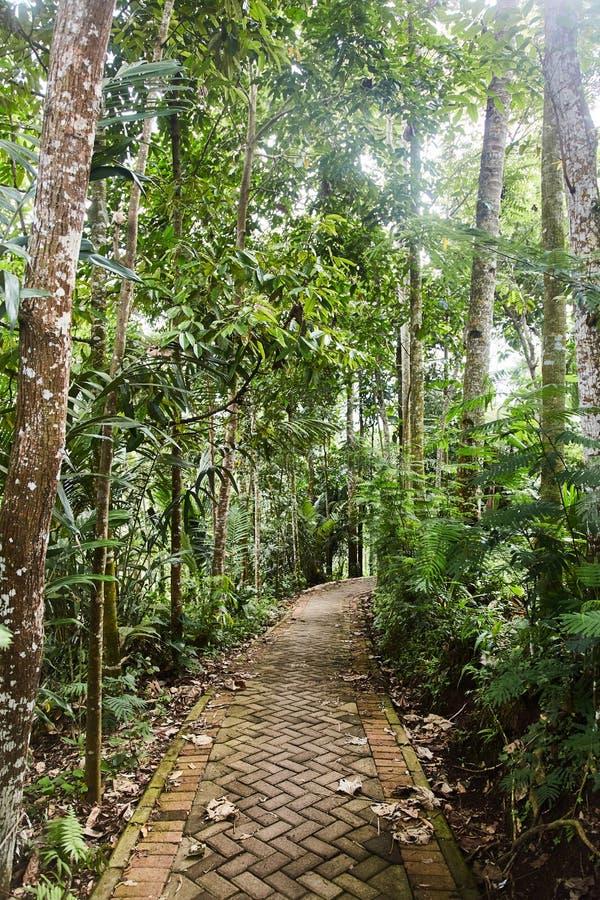 Chemin rocheux étroit dans la jungle photo libre de droits