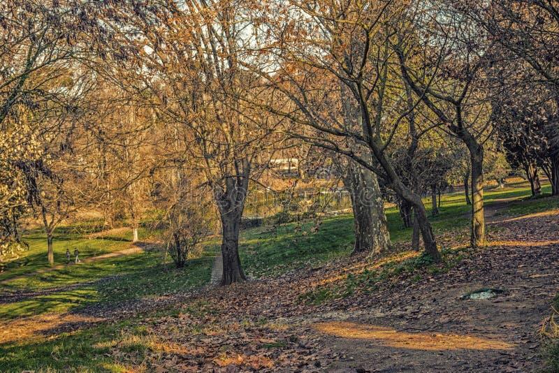 chemin rugueux en parc de ville images libres de droits
