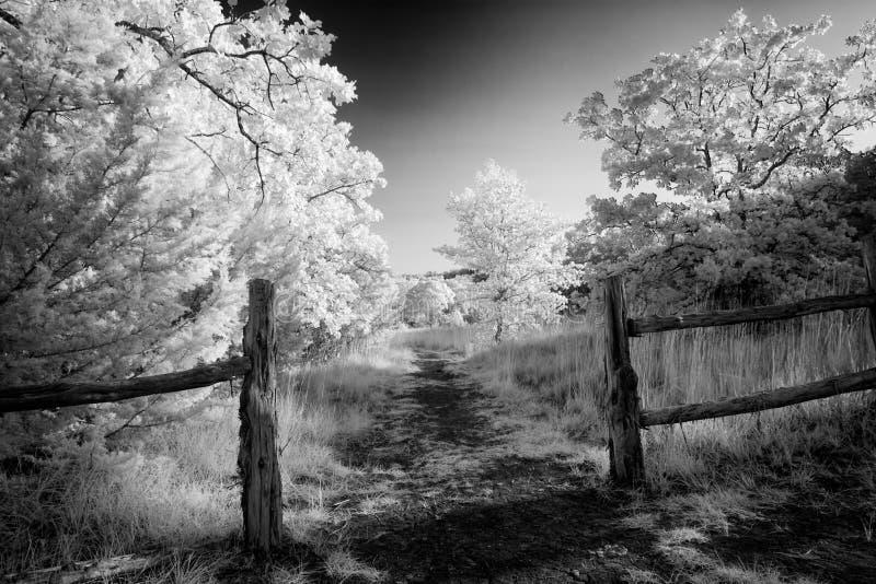 Chemin rural dans le Texas images stock