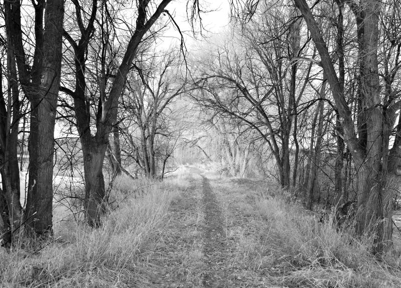 Chemin rural de l'hiver en noir et blanc image libre de droits