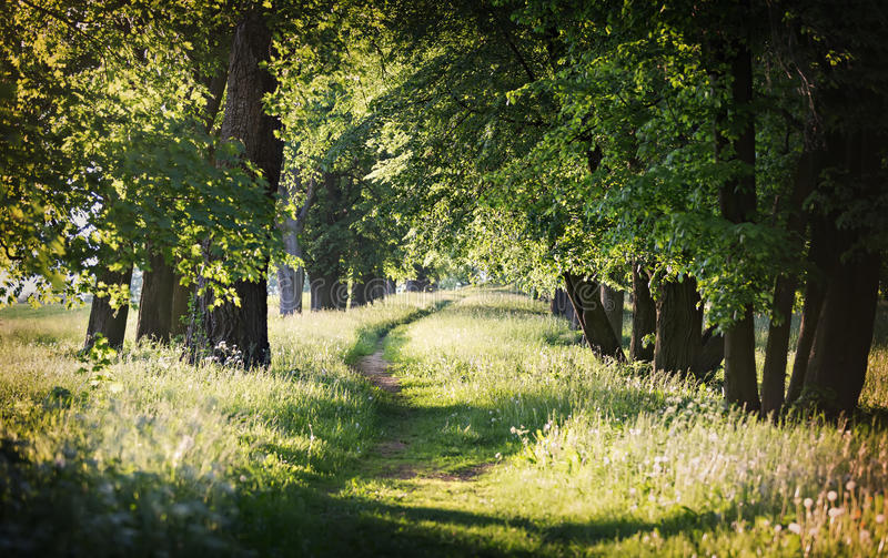 Chemin rural parmi les arbres image stock