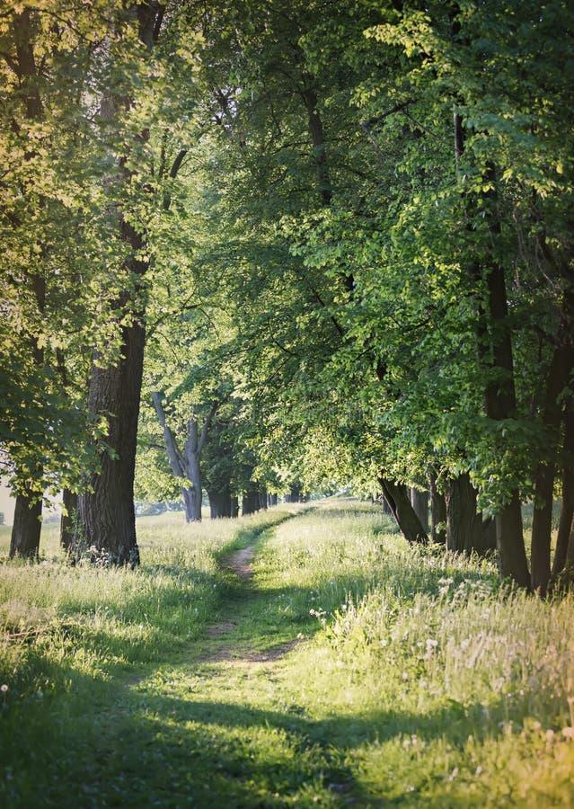 Chemin rural parmi les arbres images stock