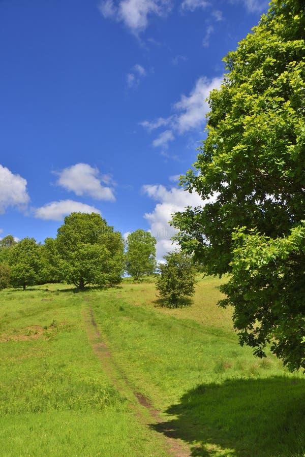 Chemin scénique en parc central occidental de pays de l'Ecosse photos libres de droits