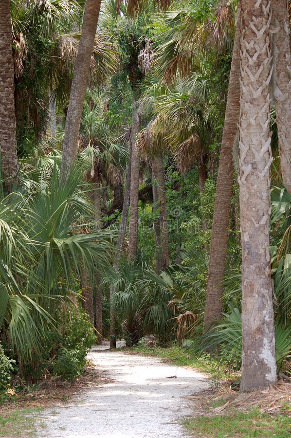 Chemin tropical photos stock