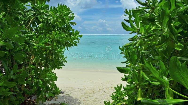 Chemin vers l'océan sur les Maldives photographie stock libre de droits