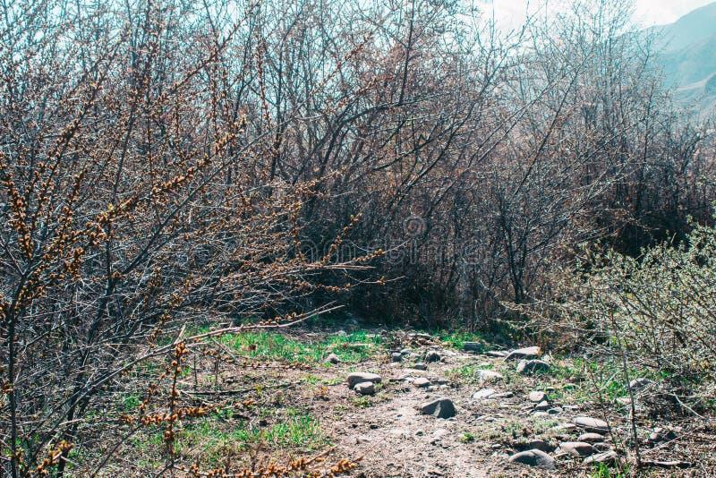 Chemin vert sur le fond des arbres photo libre de droits