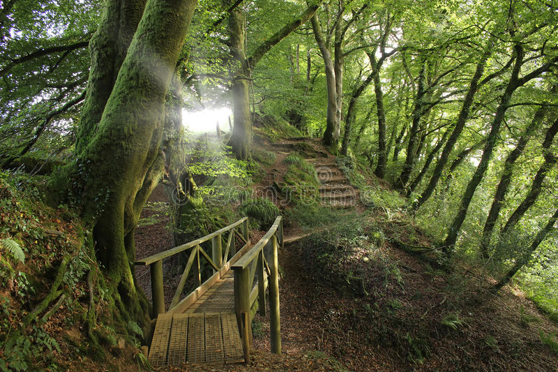 Chemins forestiers, Angleterre image libre de droits