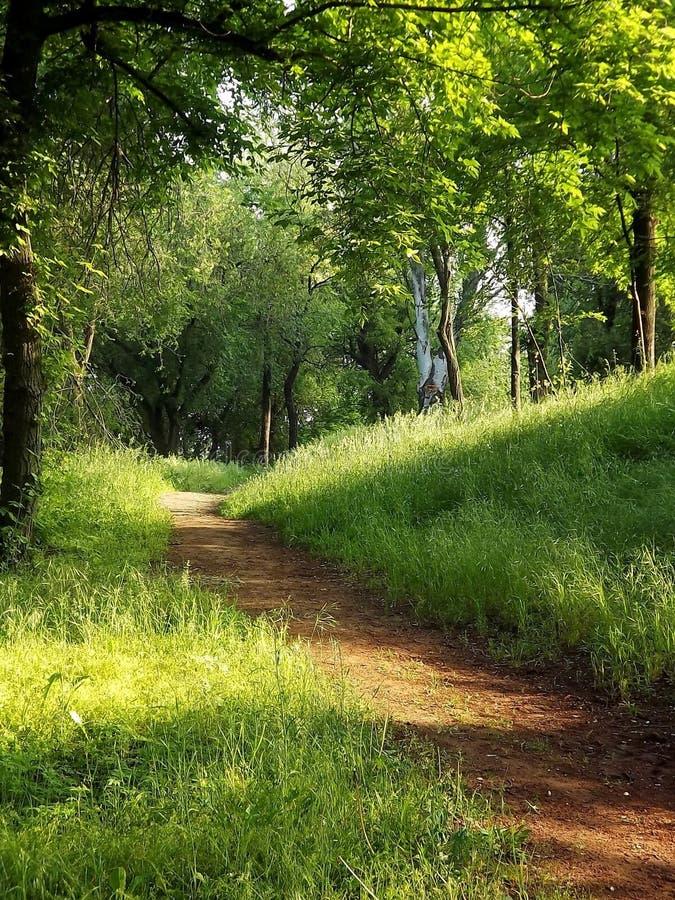 Chemins forestiers pour marcher et pulser photos stock
