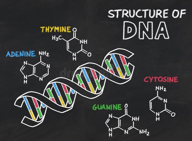 Chemische structuur van DNA op een bord vector illustratie