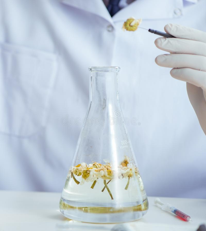 Chemist mixing perfumes in the lab. The chemist mixing perfumes in the lab royalty free stock images