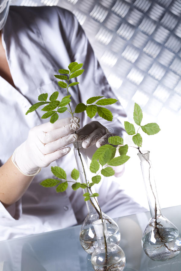 Chemistry equipment, plants laboratory experimental.  royalty free stock photography