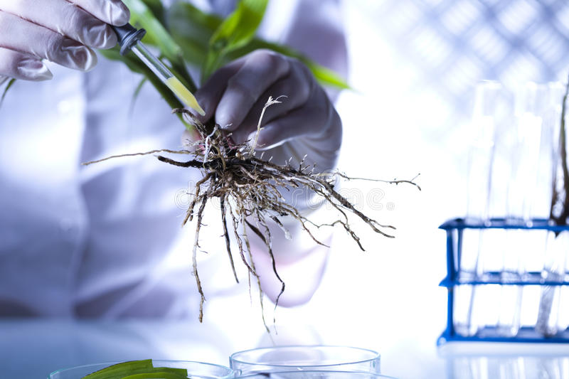 Chemistry equipment, plants laboratory experimental.  royalty free stock images