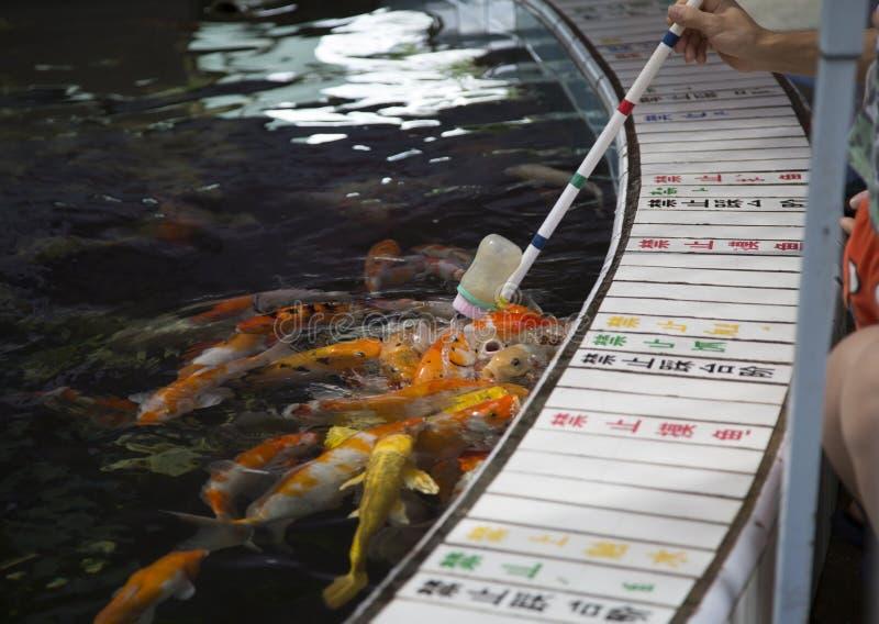 Chengdu, porcelana: peixes da alimentação imagem de stock