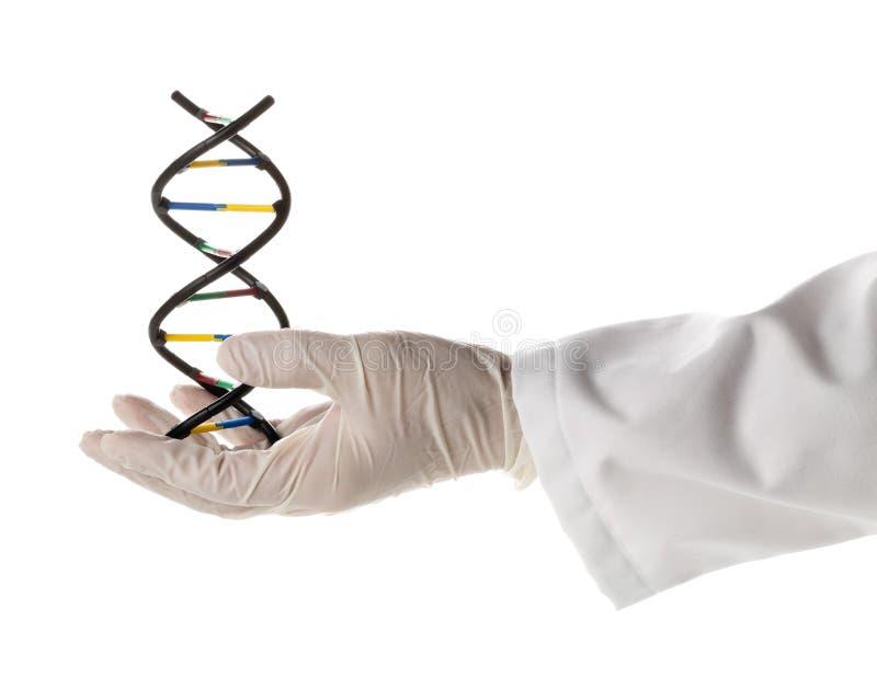 Chercheur avec le gant tenant le modèle de molécule d'ADN photographie stock libre de droits