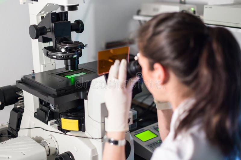 Chercheur des sciences de la vie microscoping dans le laboratoire scientifique génétique image stock