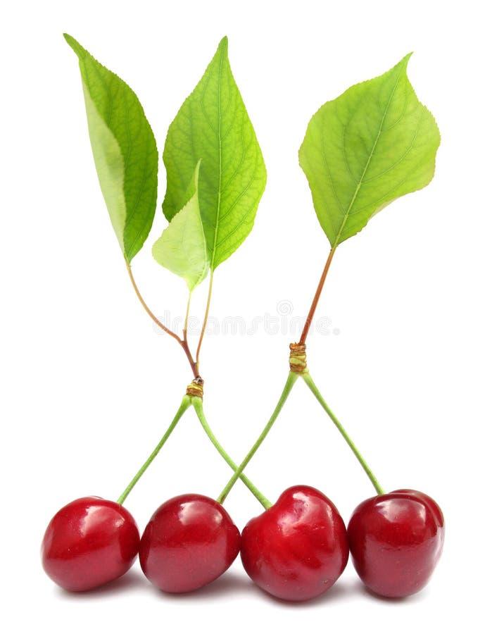 Cheries mit grünen Blättern stockfotos